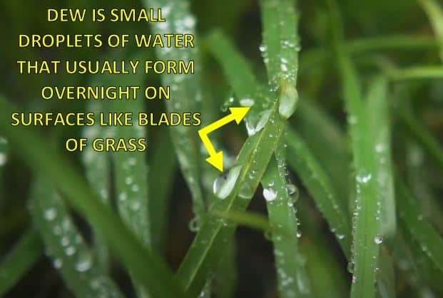 diagram showing dew on blades of grass